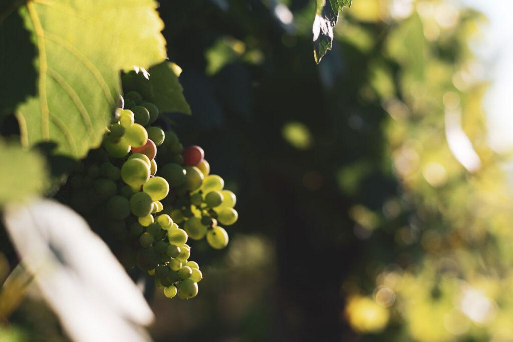 Wein Tour Die Weinschmeckerin
